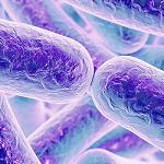 Metode de depistare a bacteriilor în alimente