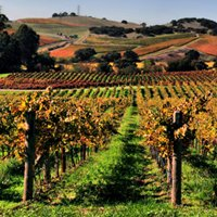 california dreaming, wines & (wet) dreams