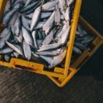 Noi tendințe pe piața de pește