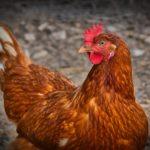 Cum evităm carnea nesănătoasă