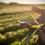 De ce să cultivi soia? Printre cele mai cultivate plante de români