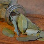 Frunzele de dafin - sănătate curată și diferite utilizări