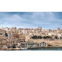 malta, soimului maltez