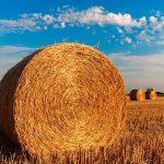 Obiective de Durabilitate pentru 2030 pt. creșterea rezilienței sectorului agricol